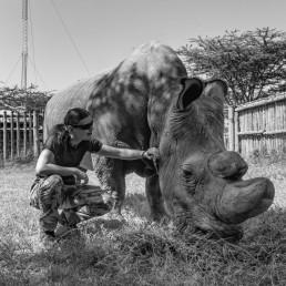 Sudan, the last male northern white rhino and Piritta in 2016 in Ol Pejeta Conservancy, Kenya.