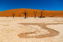 The magical Deadvlei. Sossusvlei desert, Namibia.